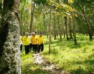 Kebun Karet di Kelurahan Pijoan, Kabupaten Muarojambi